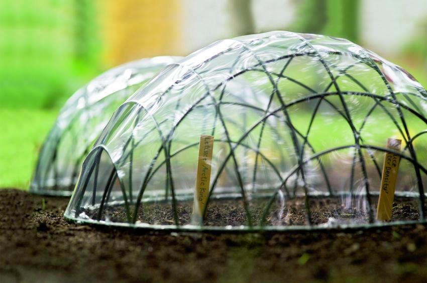 Мини парники для проращивания семян в открытом грунте можно создать, используя проволоку, пленку и строительный фен для закрепления полиэтилена