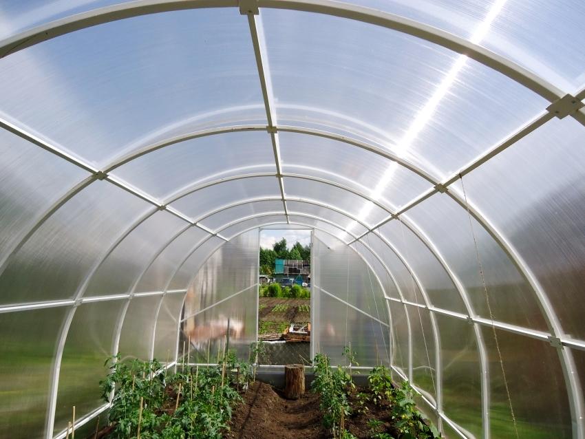 Правильный уход за теплицей позволит не только обезопасить растения от вредоносных бактерий, но и продлить срок эксплуатации конструкции