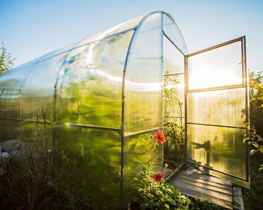 Поликарбонат отлично пропускает солнечный свет, благодаря чему овощные культуры быстрее развиваются и созревают