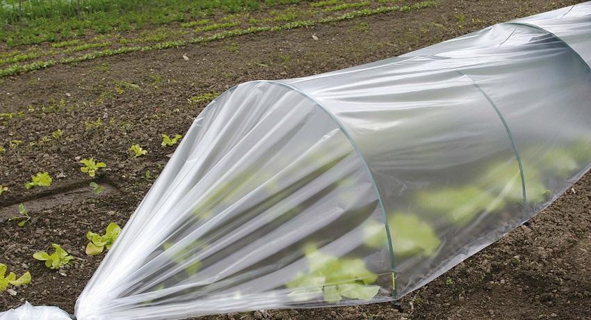 Парник из пластиковых дуг и пленки