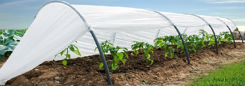 Парник защитит урожай от вредителей и насекомых