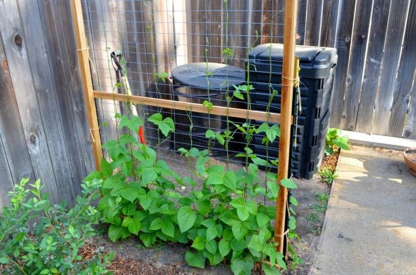 Для того чтобы замаскировать компостер на небольшом участке можно использовать ширму и плетущиеся растения