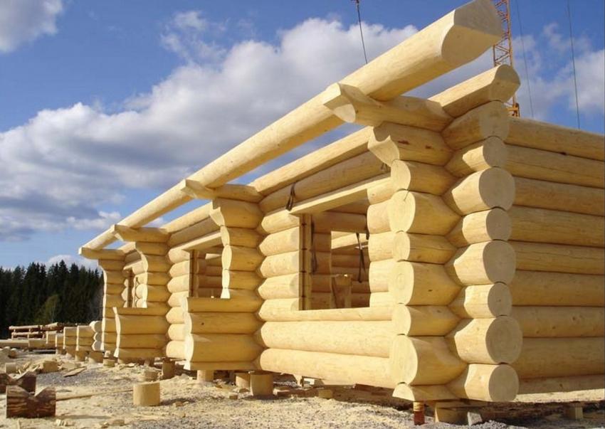 Для строительства бани из сосны используется древесина двух видов: смоляная и сухощепка