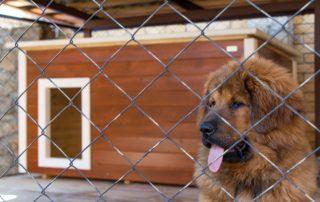Вольер для собак: фото удачных конструкций, сделанных своими руками