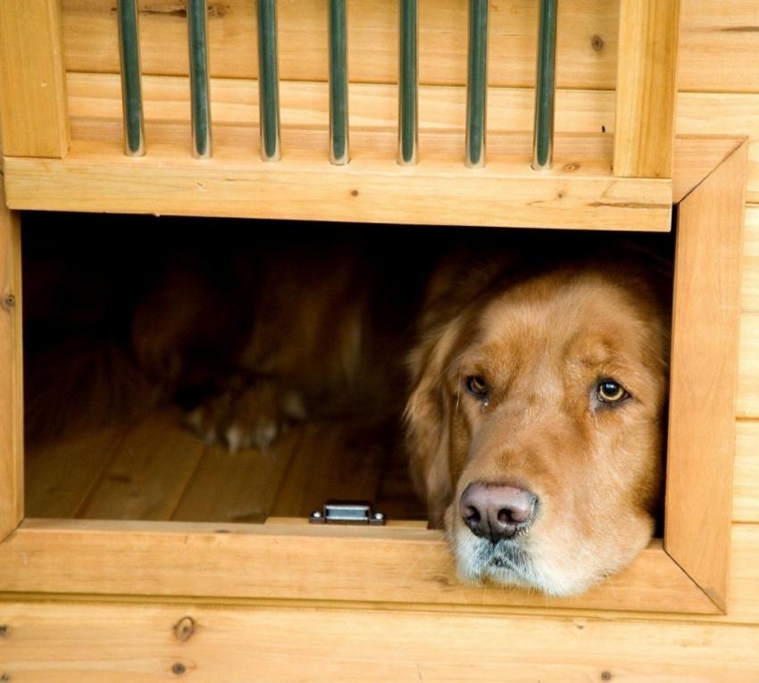 При строительстве вольера из дерева необходимо тщательно зачистить все доски и другие элементы, чтобы избежать травмирования собаки