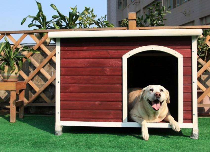 При покраске будки для собаки, необходимо использовать только безопасные средства без резкого запаха