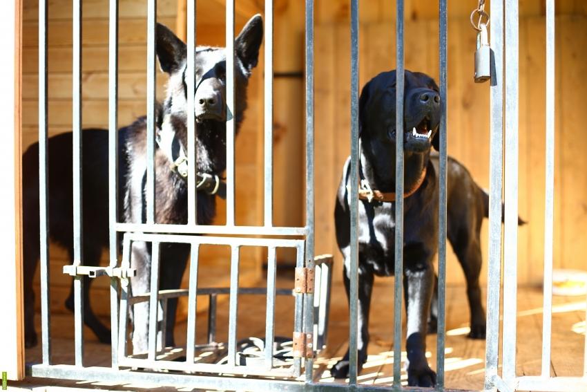 При содержании нескольких собак в одном вольере необходимо обустроить специальные окна для кормления