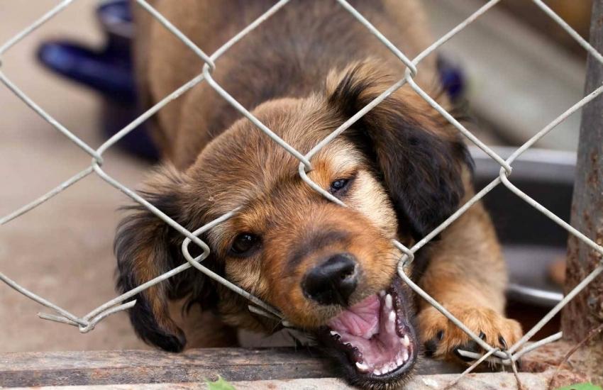 Крепление сетки должно проводится таким образом, чтобы собака не могла поранится