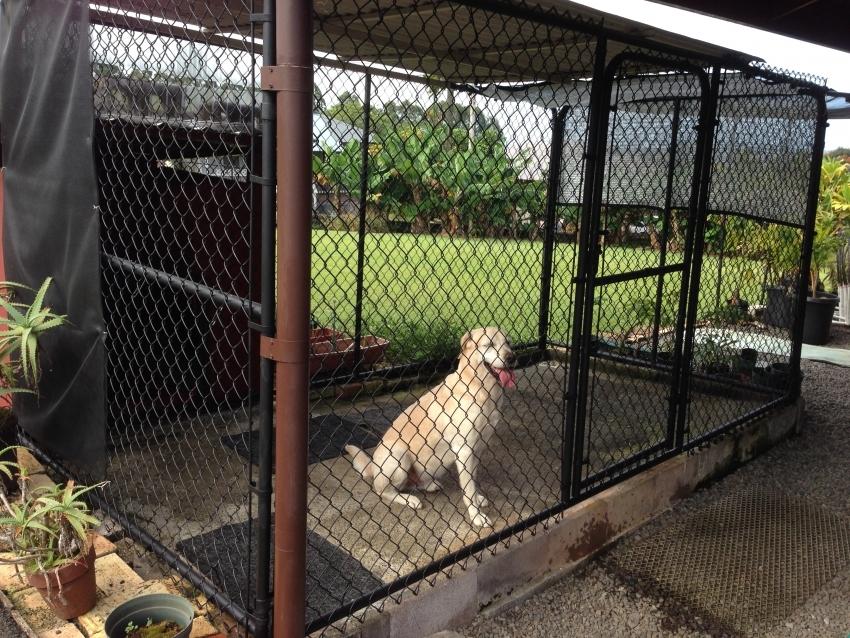 Для строительства вольера для собак крупных пород необходимо выбирать надежные крепкие материалы