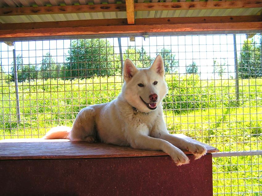 Для комфортного проживания, размер вольера должен соответствовать потребностям той или иной породы собаки