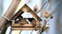 Кормушки своими руками для птиц: интересные идеи и советы для их воплощения
