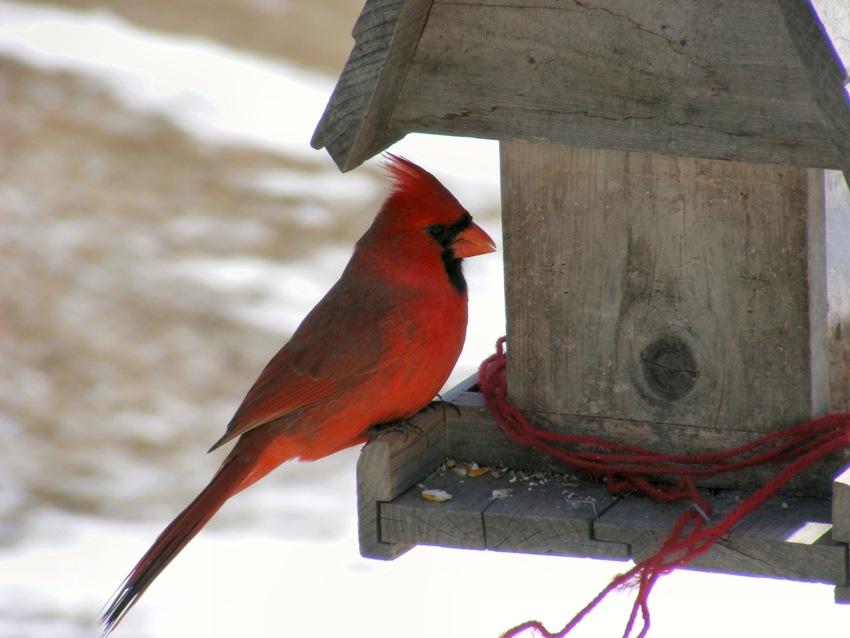 Яркие элементы на кормушке привлекут внимание птиц