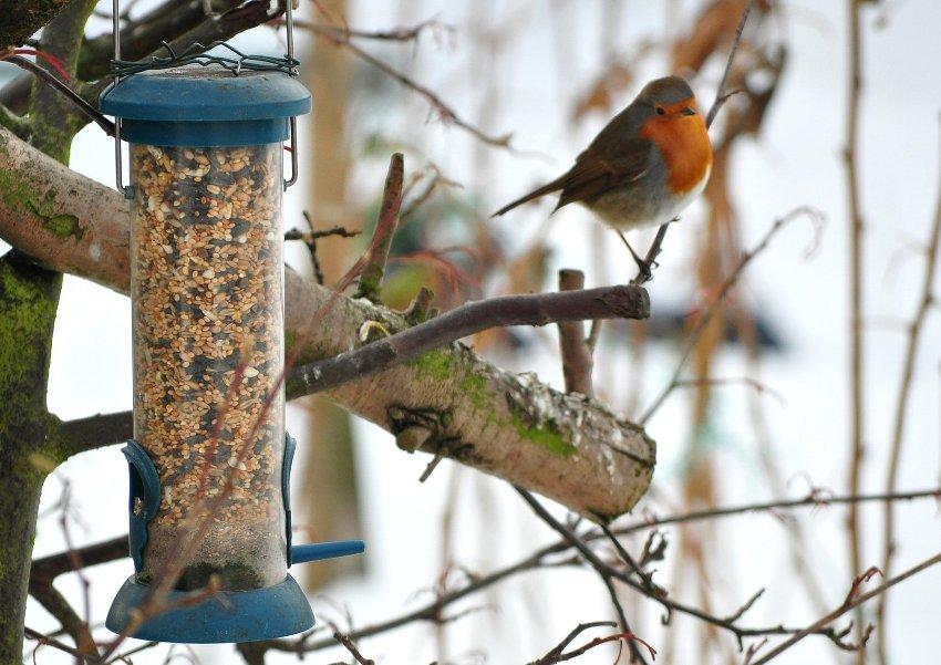 Кормушка бункерного типа может уместить большой запас корма для птиц