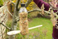 Птичья столовая из полиэтиленовой бутылки и деревянной ложки