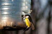 5-литровая бутылка способна вместить много корма для птиц, с запасом на несколько недель