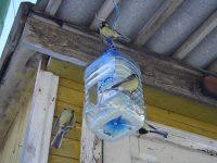 Дверцы в бутылке лучше располагать не у самого дна, что обеспечит определенный запас корма