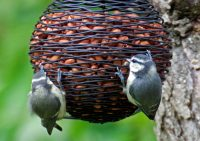 Оригинальная плетеная корзиночка с орехами для птиц