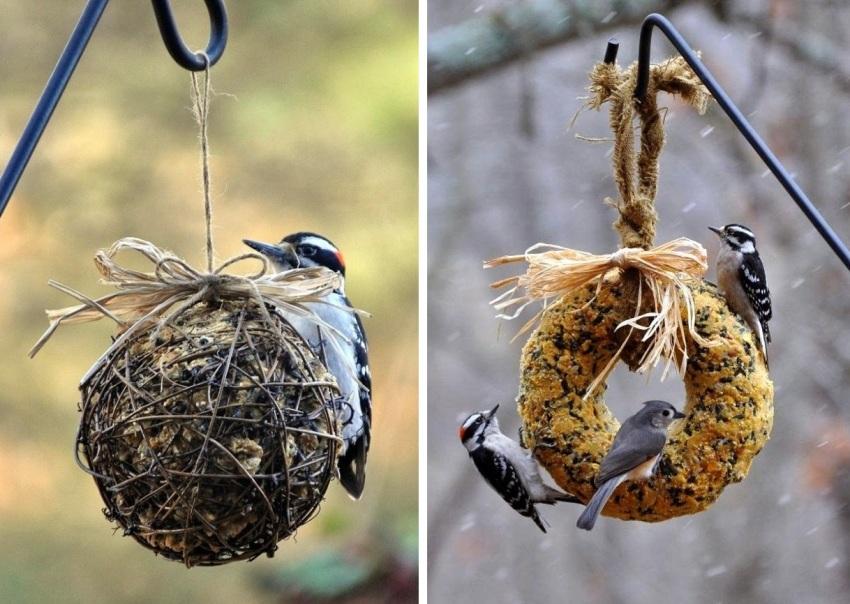 Подвесные конструкции из зерна не только помогают подкармливать птиц, но и украшают сад