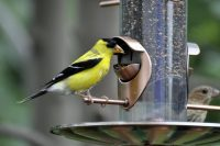 Кормушка бункерного типа для одновременного кормления двух птиц