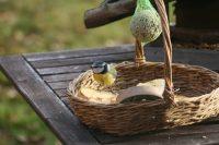 Простой способ сделать для птицы столовую - использовать плетеную корзинку