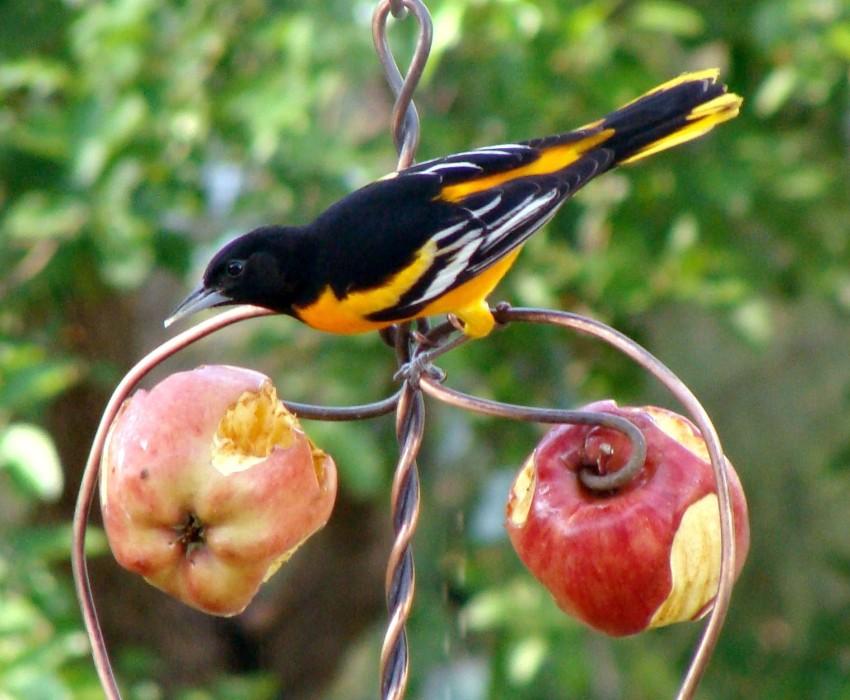 Кованый держатель фруктов для витаминной подкормки птиц