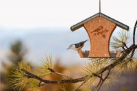 Кормушку для птиц можно декорировать с помощью рисунков