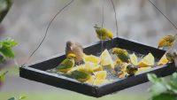 В лотке для птиц можно разместить зерно и фруктовую подкормку