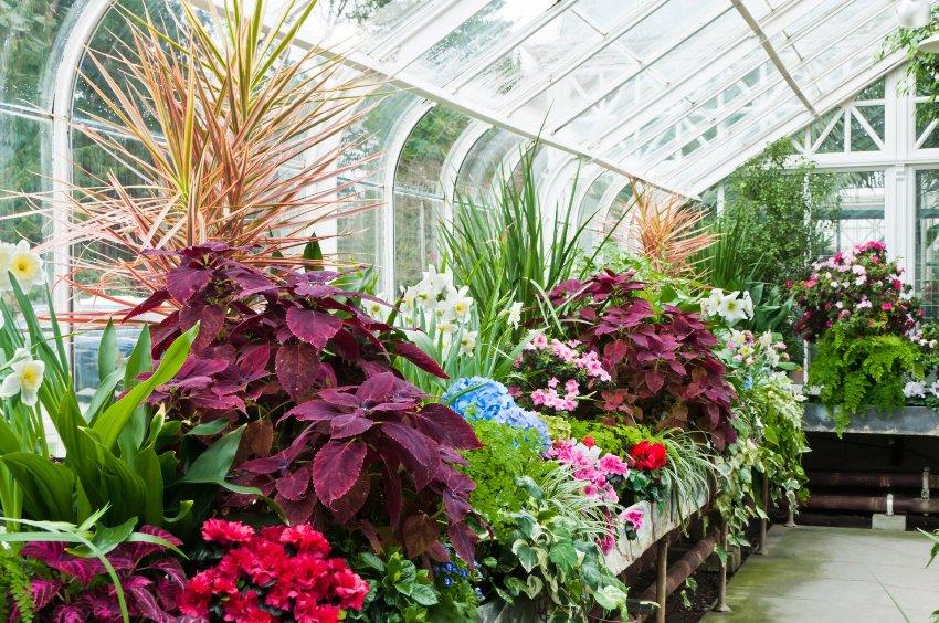Оранжерея (более упрощенный вариант – теплицы) ориентирована в основном на выращивание растений в специальных условиях