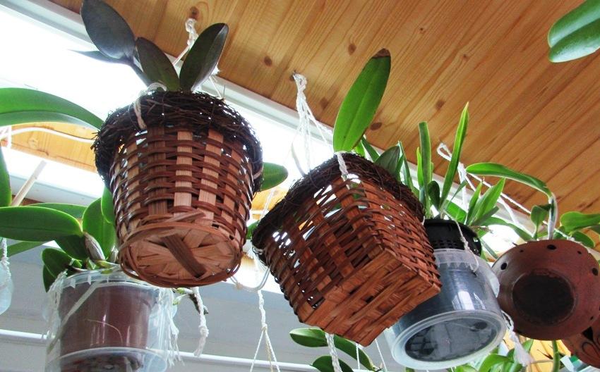 Досветку в зимнем саду можно организовать с помощью люминесцентных, натриевых или металлогалогеновых фитоламп, которые подбираются в соответствии с характеристиками ростений