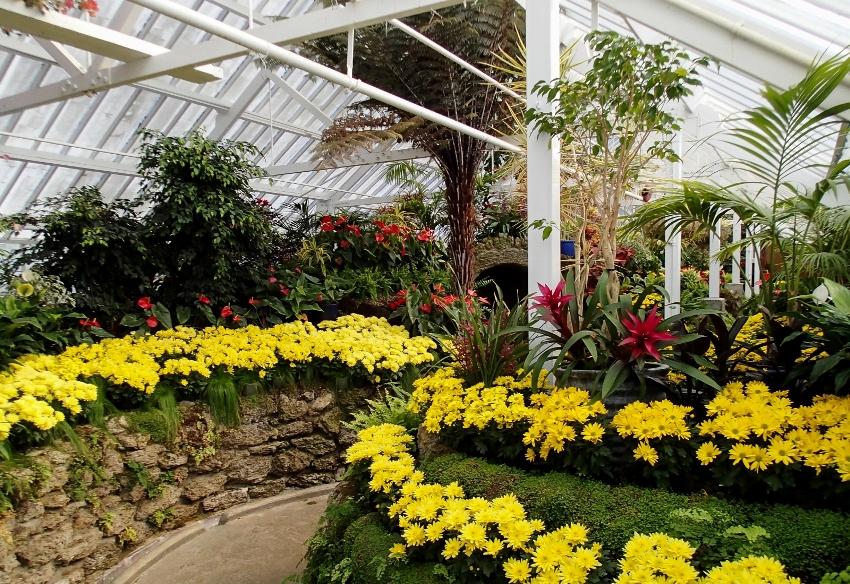 Подбирая растения для зимнего сада, важно позаботиться о том, чтобы они были несколько разноплановыми, это придаст шарм и оригинальность любому помещению