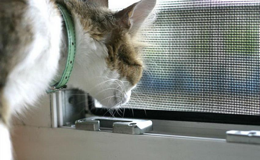 Если в доме есть кошка, то целесообразно установить москитную сетку устойчивую к повреждениям и выдерживающую его вес