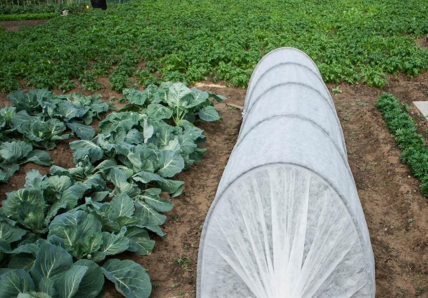 Спанбонд позволяет легко создать эффективный парник и защитить молодые ростки различных культур от резких перепадов температур
