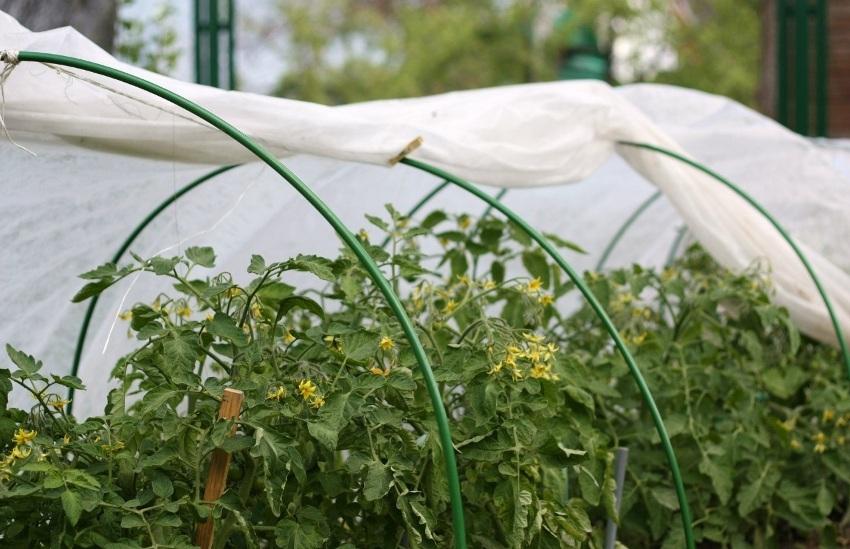 В процессе выращивания овощных или плодово-ягодных культур можно обеспечить надежную защиту растений от неожиданных заморозков и других неблагоприятных погодных явлений с помощью спанбонда
