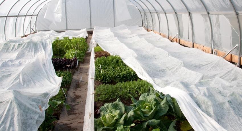 С помощью спанбонда можно легко создать на участке оптимальные условия для роста и развития растений на протяжении всего года