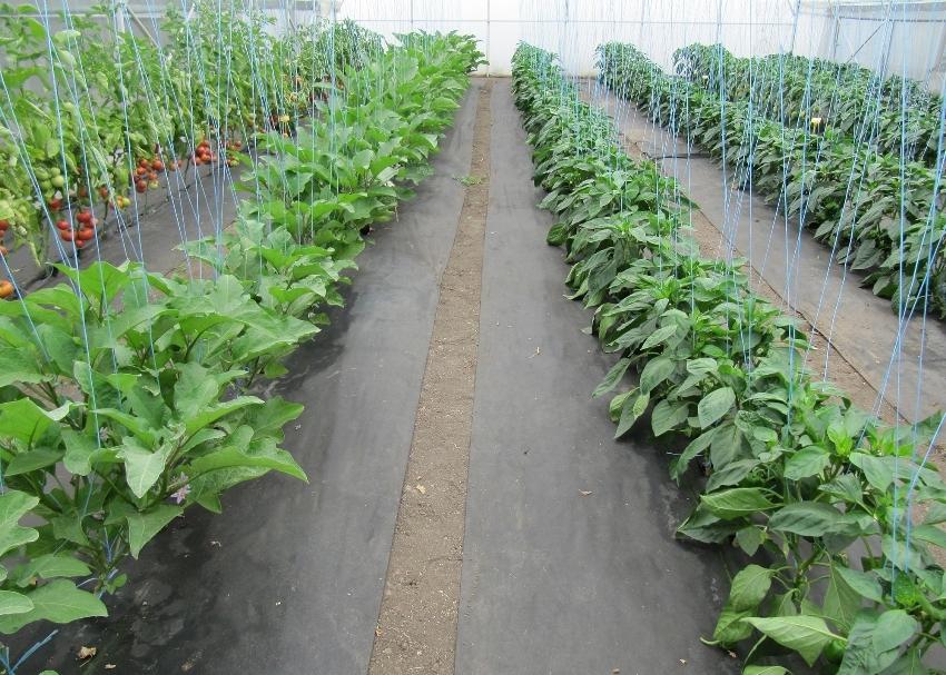 Черный спанбонд выпускается разной плотности, но для дачного участка рекомендуется покупать не меньше 17-60 г/м кв