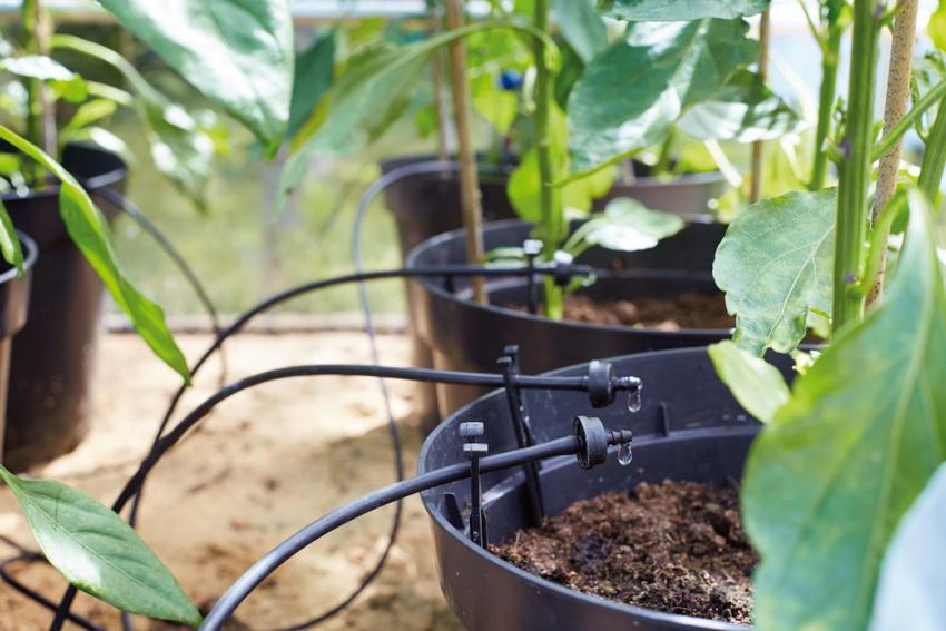 Системы автоматического капельного полива удобны для рассады и цветов в горшках