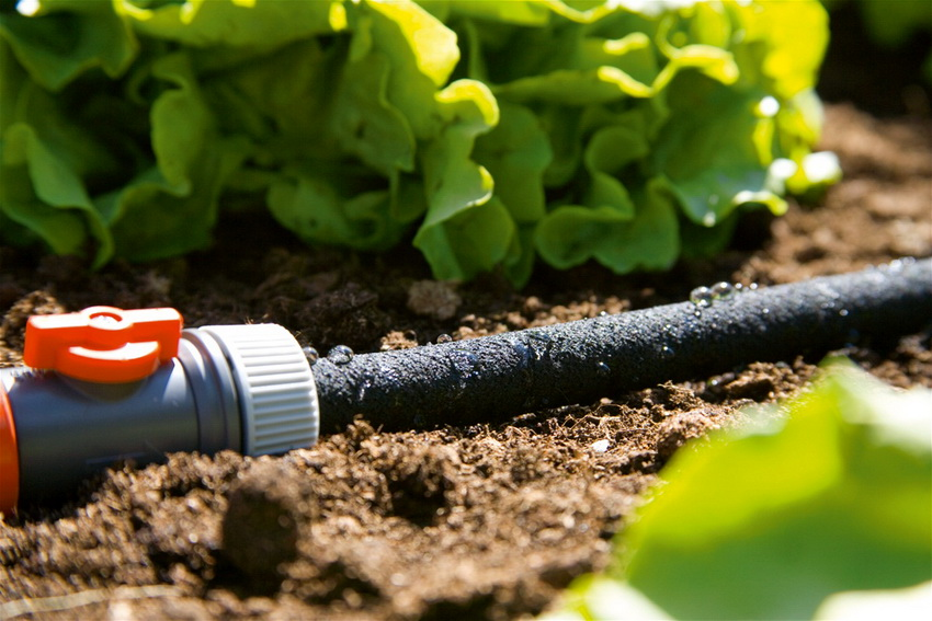 Для распределения воды к емкости подключается основная труба, от которой следуют ответвления к точкам полива