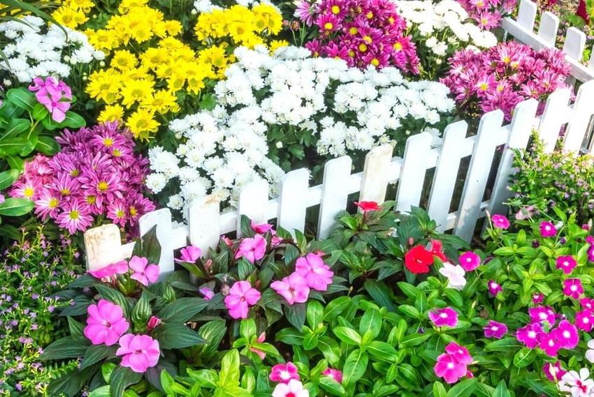 Белая декоративная изгородь выглядит очень нарядно в палисаднике