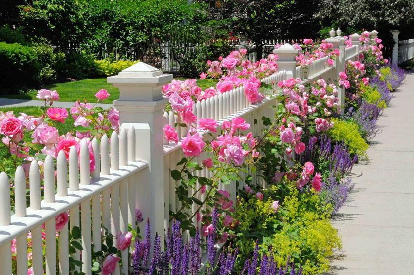 Белый классический забор часто сочетают с розами и другими цветами, что придает участку праздничный вид