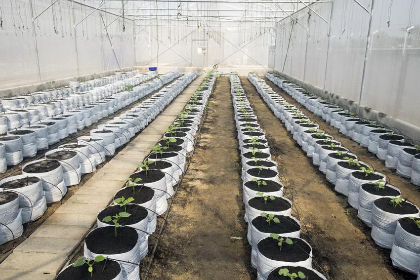 Для большого количества растений в теплице лучше устанавливать автоматическую или полуавтоматическую систему полива