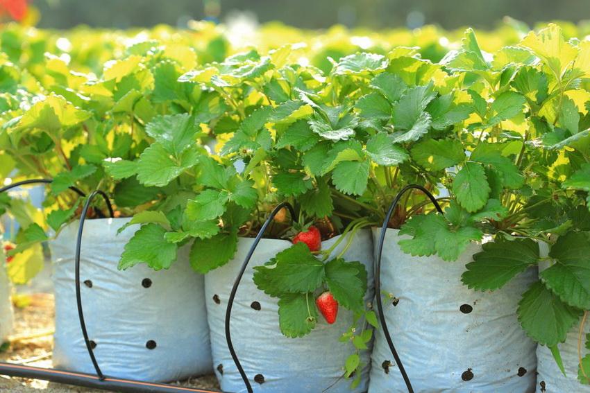 Принцип работы капельного полива основан на подаче воды в небольших количествах прямо к корневой системе растения