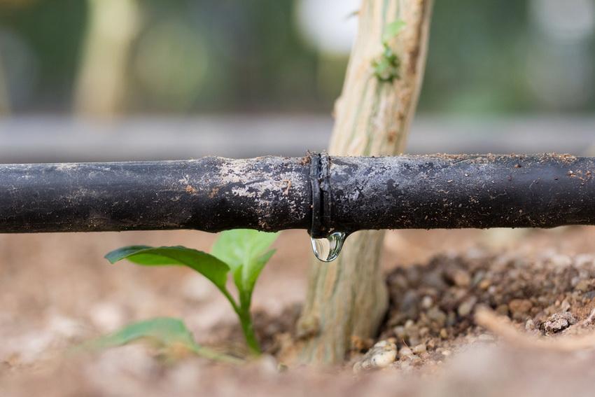 Для достижения лучшего эффекта необходимо тщательно рассчитывать количество подаваемой в систему воды и дозировку на каждое растение
