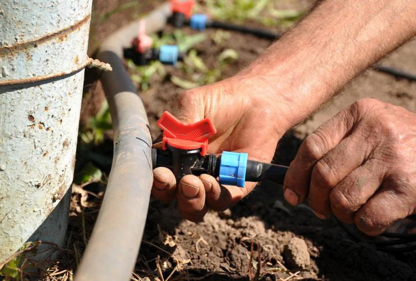 Обустройство системы капельного полива своими руками позволит значительно сэкономить