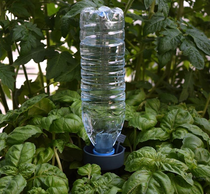 Капельный полив из пластиковых бутылок может быть прикорневым и поверхностным