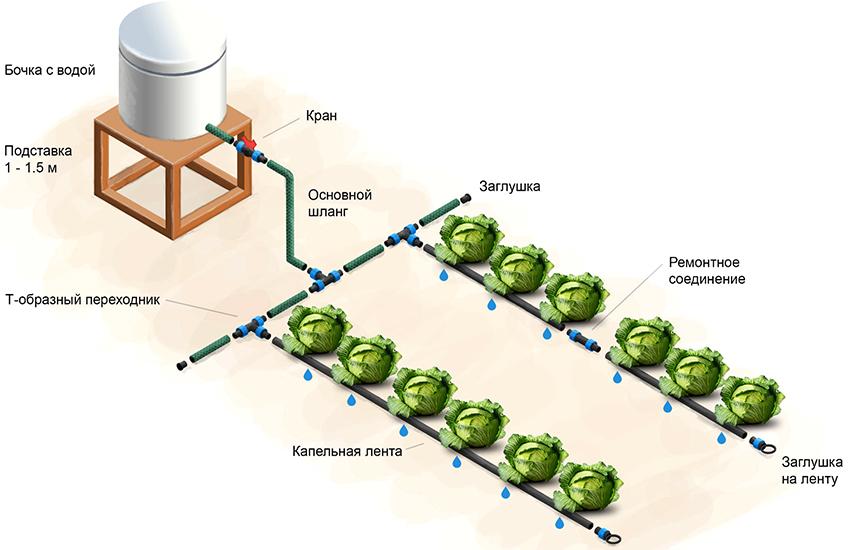 Схема работы капельной системы для полива «Аквадуся»