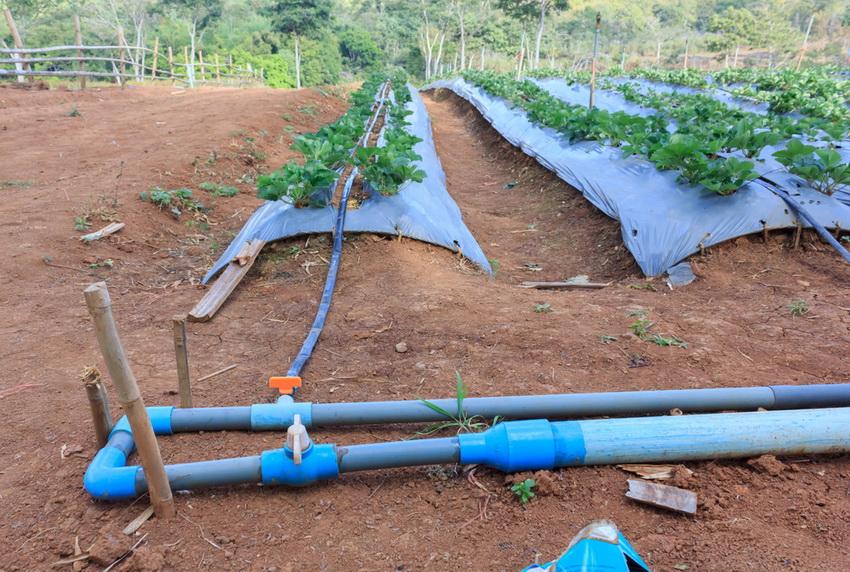 «Паракапельная» система полива для дачного участка