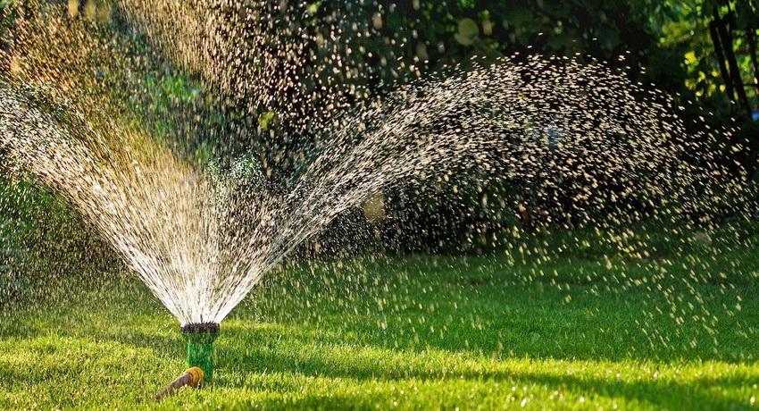Каждый вид зеленых насаждений и огородных культур нуждается в разных способах полива
