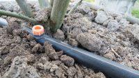Каждый из способов подачи воды к корневой системе растения имеет как свои достоинства, так и недостатки