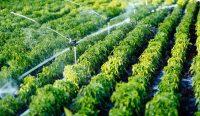 Полив дождеванием часто используют для газонов и длинных грядок