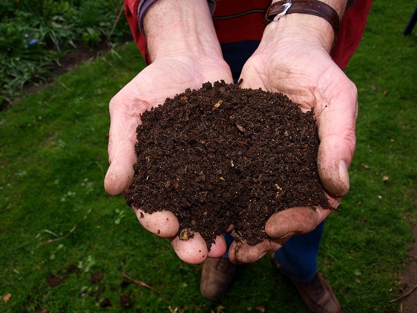 При посадке в выкопанные траншеи необходимо добавлять питательную посадочную смесь